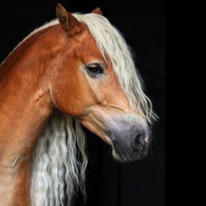 DNA-profil för häst