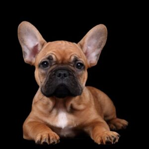 DNA-profil för hund