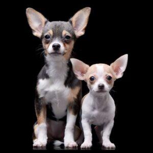 Faderskapstest för hund