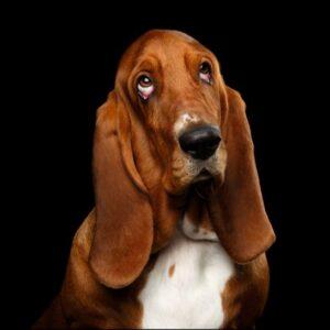 Nedärvda sjukdomstester för hund