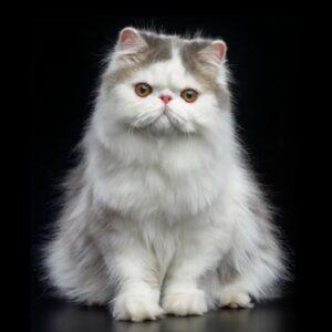 PKD-test för katt